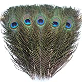 TinaWood 10PCS Real Natural Peacock Eye Feathers 9.8-11.8 inch for DIY Craft, Wedding Holiday Decoration