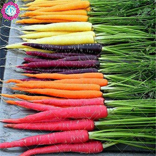 200 st/påse regnbåge morotfrön. MIX-sju galna sorter grönsaksfrön. Organiska arvegods frön. Happy gårdsfrö gratis frakt