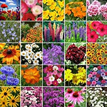 Non GMO Bulk Northeast Wildflower Seed Mix (1 Lb)