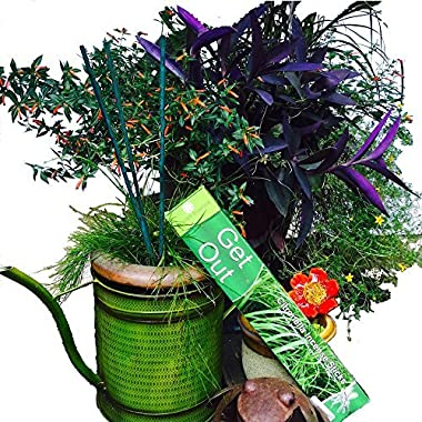 Vibrant Essence ® Double Strength All Natural Mosquito Repellent Incense Sticks. Potent with Great Aroma. Bamboo infused Citronella, Lemongrass, and Cinnamon plant oils. 2.5 Hour Burn Time.