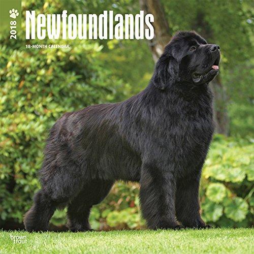 Newfoundlands - Neufundländer 2018 - 18-Monatskalender mit freier DogDays-App: Original BrownTrout-
