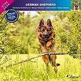Deutscher Schäferhund 2020 - Kalender Affixe (German Shapherd)
