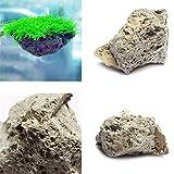 PUAK523 Bimsstein für Aquarien, schwimmender Felsen, Moosstein, natürlicher Bimsstein, Dekoration, 3 cm - 5 cm, 1 Stück
