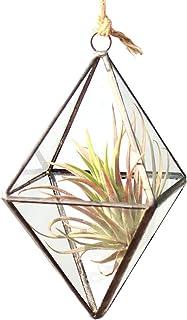 DingDong ミニクリアガラスの六面体形状ダイヤモンド幾何学エアープラントテラリウムウォールハンギングポットプランターの花瓶の側面の長さ3x3x5.9インチ