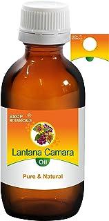 SSCP Botanicals Lantana Camara Pure & Natural Essential Oil (Lantana Camara) (1000 ml (33.80 Oz) Aluminium Bottle)