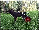 Chariot De Chien,Poussette pour Animaux Scooter Chien Roulant Pet Fauteuil Roulant Puxiliaire...