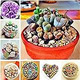 Lonlier Semillas de Suculentas Raras 10/20/50 pcs Bonsai Semillas de Colores Piedras Vivas