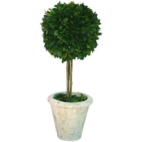 Live Topiary Amazon Com