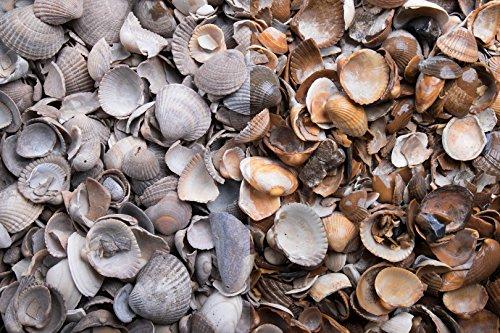 Kies Splitt Zierkies Edelsplitt Muscheln (m³=ca.650kg)mm Sack 20 kg