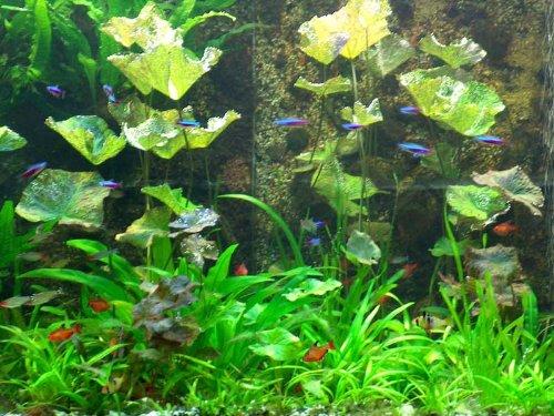 XL Südamerika Wasserpflanzen Set für 400l Aquarium, Aquariumpflanzen