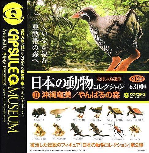 Capsule Q Museum Wald geheimen Eingang von Japan Tiersammlung II Okinawa Amami   Yanbaru