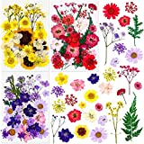 100Pcs Real Dried Pressed Flowers for Resin, Thrilez Dried Flowers Pressed Leaves Herbs Kit for Scrapbooking, Resin Jewelry Crafts and DIY Candle(Purple, Yellow, Red)