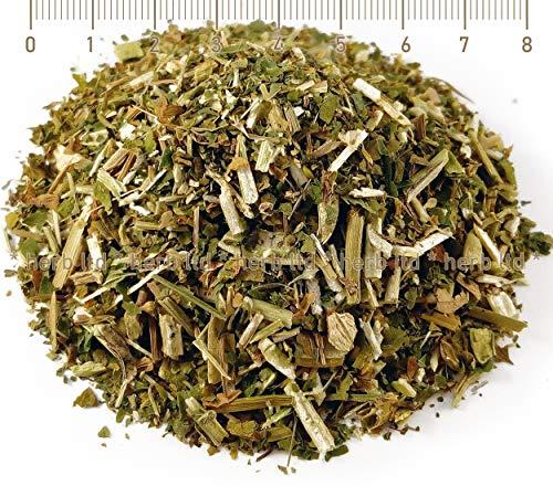Tragant, Astragalus Membranaceus, Astragalus Glycyphyllos L., Kräuter Frucht Mit Kräuter Stängel
