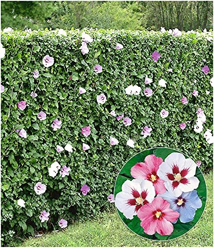 BALDUR Garten BALDUR-Garten Bild