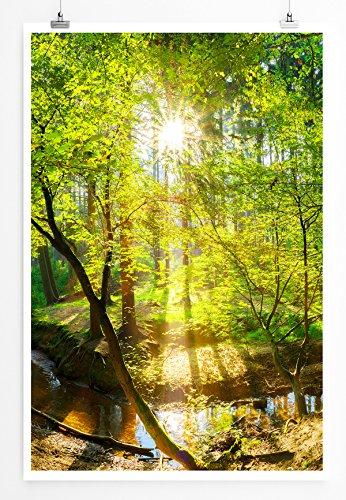 Eau Zone Home Bild - Landschaft Natur – Waldbach in der Sonne- Poster Fotodruck in höchster Qualität