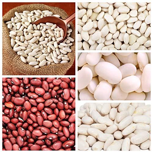 Ackerbohne - Samen von 5 Pflanzensorten -