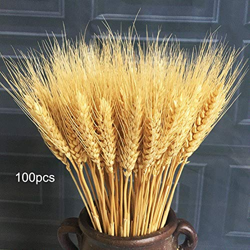 QCUTEP Artificial Wheat Grass, Artificial Natural Wheat Dried Flowers 100 PCS Wheat Stalks for Fall Wedding Centerpieces Decorations Photography Props