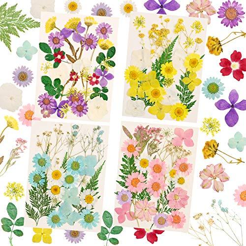 Flores prensadas secas naturales mezcladas múltiples pétalos de hojas de flores secas para bricolaje vela resina joyería colgante de uñas manualidades haciendo arte decoraciones florales