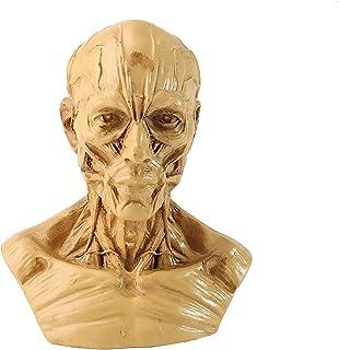 Human Bust Sculpture Statue, Anatomy Skull Head Muscle Bone Medical Model, Human Head Anatomy Model Craft Resin Skull Scul...
