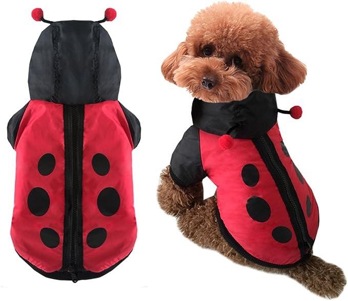 dog ladybug costume