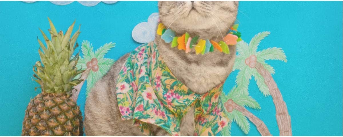 Wrapping Paper Clearance SALE Limited time Cat On Holiday Hawaiian Pines Gift Shirt Limited time trial price