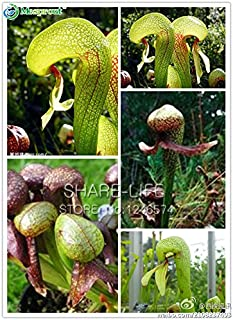Best cobra lily bulbs Reviews
