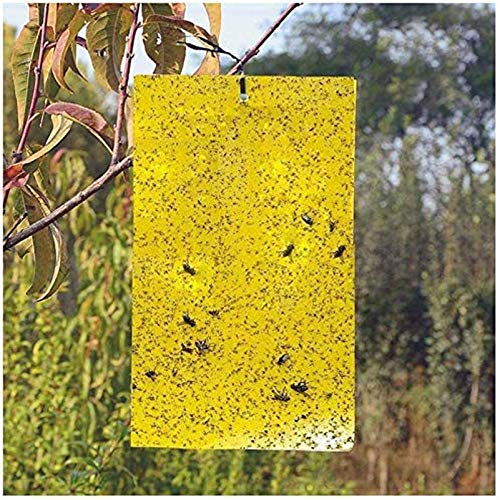 BestTrap ST2035 Sticky Traps, Flying Traps for Fruit Fly, Fungus Gnats, Aphids, Other Flying Insects, 6x8 Inch, 20 Pack - Yellow