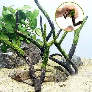 (水草)巻きたて ジャイアント南米ウィローモス付 枝状流木 Mサイズ(無農薬)(3本) 本州・四国限定[生体]