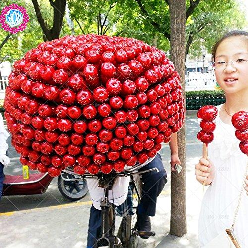 10pcs/sac chinois rouge aubépine graines, Sweet Seeds Les fruits peuvent manger des plantes Foods Maison et Jardin des graines d'arbres graines de bonsaï .Haw