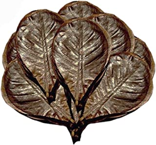 SunGrow Catappa Indian Almond Leaves, Best Way to Create Tropical Rainforest Environment..