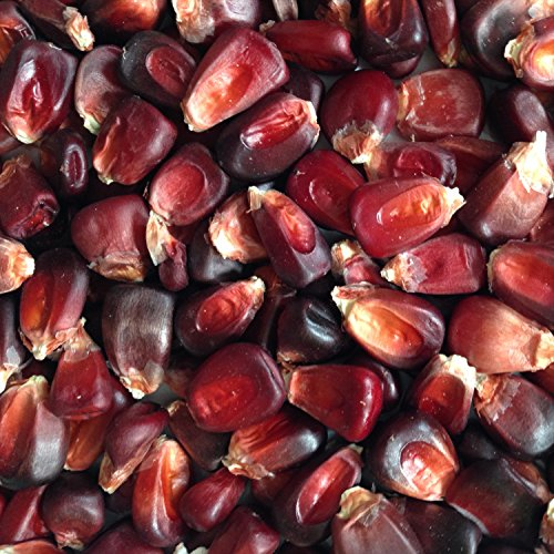 Wayland Chiles Bloody Butcher Corn, 100 Seeds