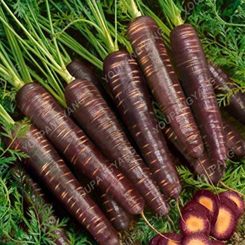 100pcs/sac Rare carotte Semences de carotte Longest fruits légumes Sweet Seeds et sain légumes Graine Bonsai plante pour jardin Noir