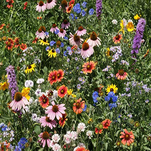 Outsidepride Northeast Wildflower Seed Mix - 1 LB