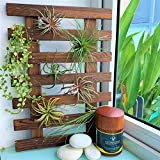 Wall Planter – Hanging Planter for Indoor Plants, Plant Stand, Air Plant Succulent Holder, Vertical Garden. Large Wall Decor for Living Room, Room Decor for Teen Girls, Bathroom Wall Decor
