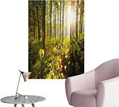 Anzhutwelve Forest Photographic Wallpaper Trees Sun Rays in Woods Foliage Greenery Scenic Outdoors Tranquil UntouchedGreen Yellow Brown W32 xL48 Space Poster