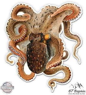 Octopus Vulgaris Vintage Octopus Drawing Merculiano - Vinyl Sticker Waterproof Decal
