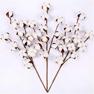 Darget Cotton Stems - 20 Inch Tall (3 Stems/Pack) Made from Real Natural White Cotton Flowers Bolls Farmhouse Style Rustic Floral for Home Decor Wedding Centerpiece