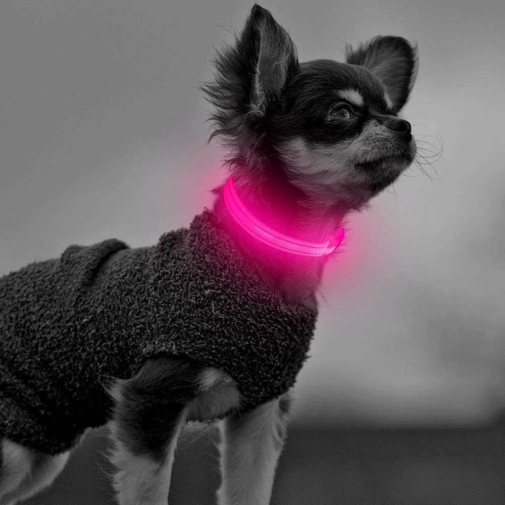 Clan-X Led Puppy Collar - USB Up Co 25% OFF Dog Rechargeable Small Light excellence