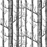 Akea Modern Birch Tree Wallpaper Roll, Black and White Forest Trunk, for Living Room, Bedroom,TV Background etc, Size 20.8inch x 32.8ft, 57 sq.feet
