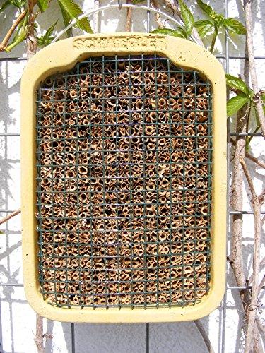 Schwegler Insektennistwand mit Naturschilf