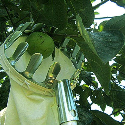 Tuingereedschap Handige Tuinbouwkundige Fruit Picker Tuinieren Appelperzik Picking Tools