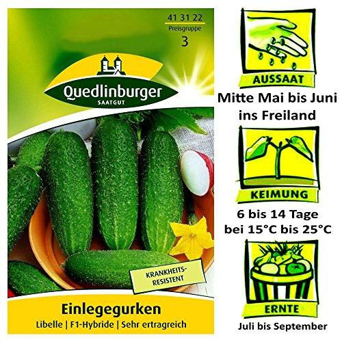 Quedlinburger Einlegegurken Sorte Libelle Cucumis sativus F1-Hybride / sehr Ertragreich / Ernte Juli bis September