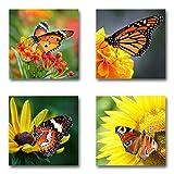 Schmetterlinge - Set A schwebend, 4-teiliges Bilder-Set je