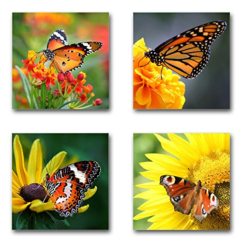 Schmetterlinge - Set A schwebend, 4-teiliges Bilder-Set je Teil 29x29cm, Seidenmatte Moderne Optik auf Forex, UV-stabil, wasserfest, Kunstdruck für Büro, Wohnzimmer, XXL Deko Bild