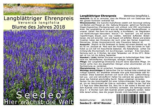 Seedeo® Langblättriger Ehrenpreis (Veronica longifolia L.) 300 Samen Blume des Jahres 2018