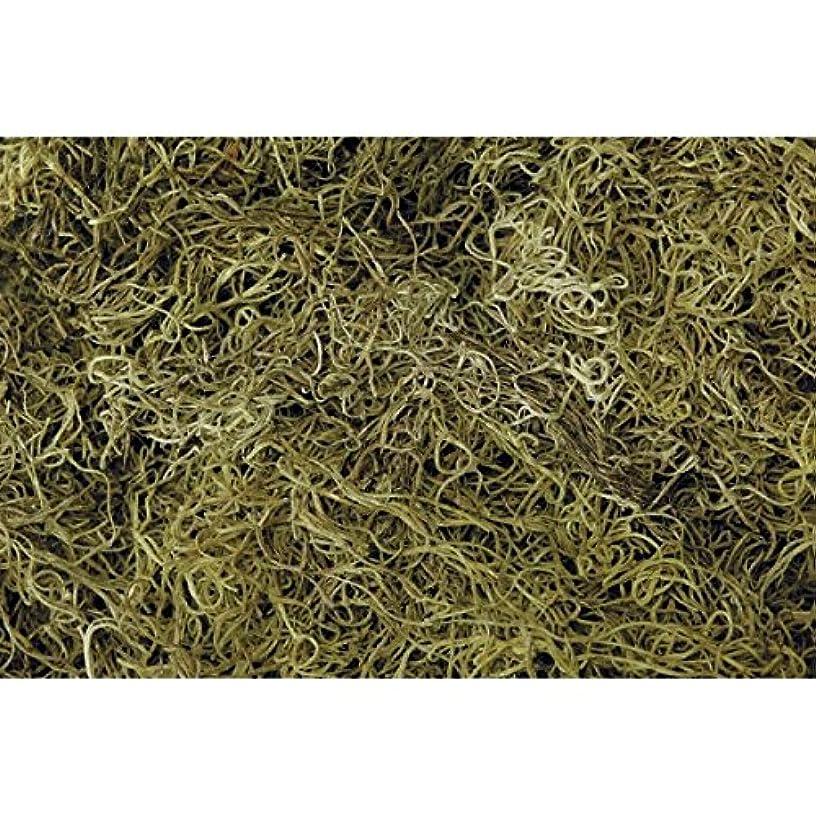 Shinoda Design Center 1 lb Bag Preserved & Dyed Light Green Spanish Moss