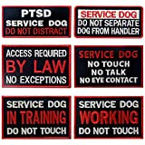 Service Dog in...image
