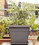 Emsa 518529 My City Garden - Macetero (30 x 30 cm, Resistente a Las heladas, Alta Resistencia a los Rayos UV), Color Gris