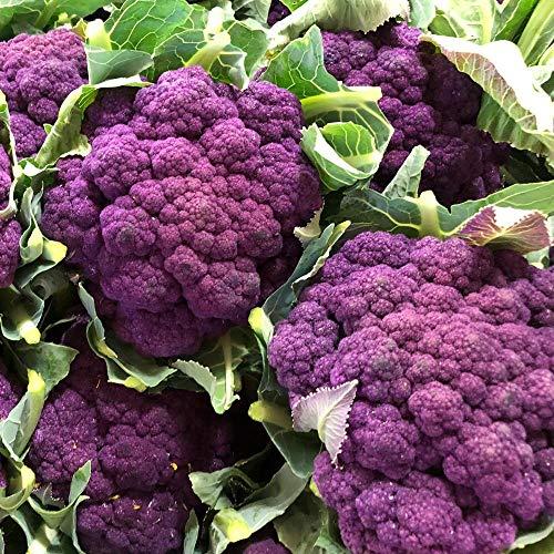 ca. 100 Samen Blumenkohl Di Sicilia violetto - außergewöhnliche, violette Sorte