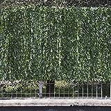 Frangivista verde, siepe ornamentale con foglie ad ago largo